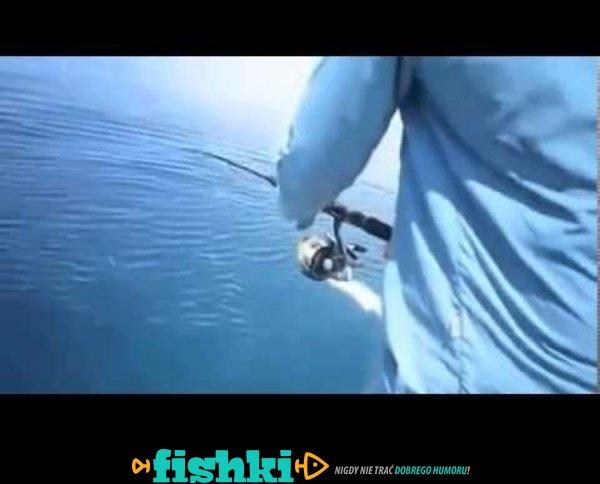 To, co się dzieje, gdy rekin chce ryb