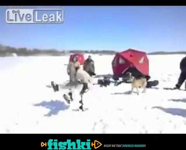 Zakręcony rybak bawi się doskonale na lodzie