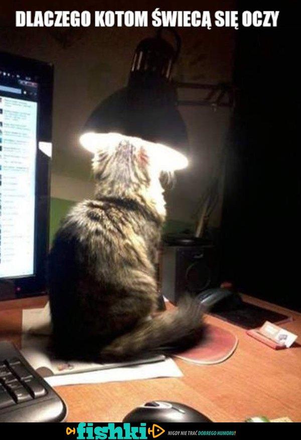 Dlaczego kotom świecą oczy?