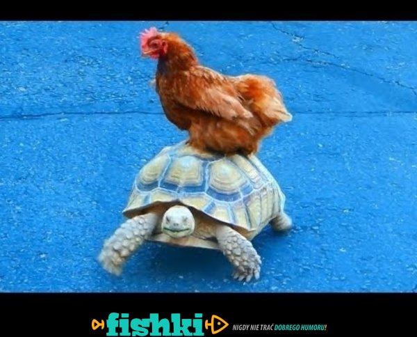 Potrzebujesz taksówki? Żółwie!