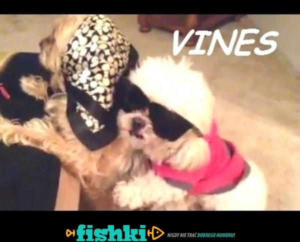 Śmieszne psy - Vines