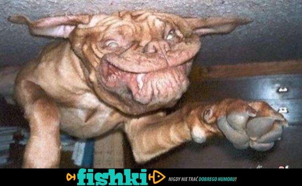 Psy do góry nogami - zdjęcie 1