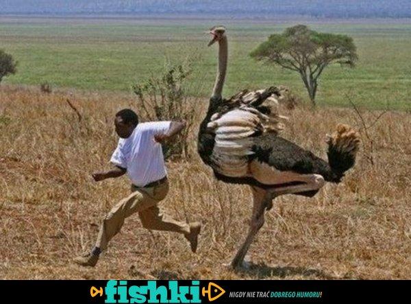 Normalny dzień w Afryce