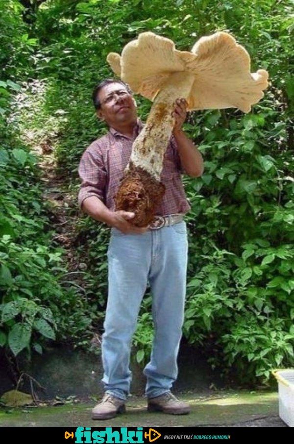 Ogromne grzyby