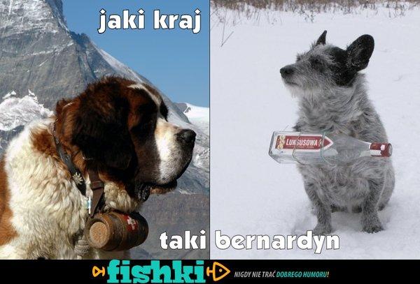 pies - ratownik