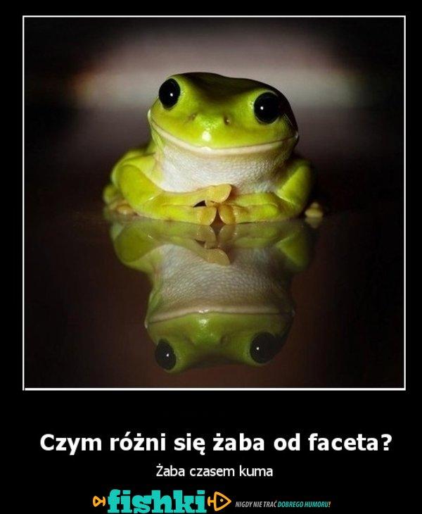 Czym różni się facet od żaby?
