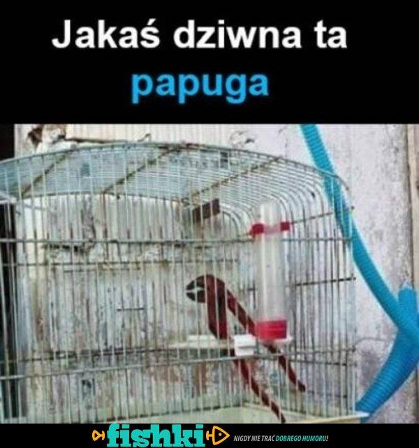 Jakaś dziwna ta papuga...