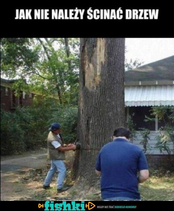 Tak nie ścinaj drzewa!