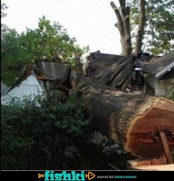 Tak nie ścinaj drzewa! - zdjęcie 4