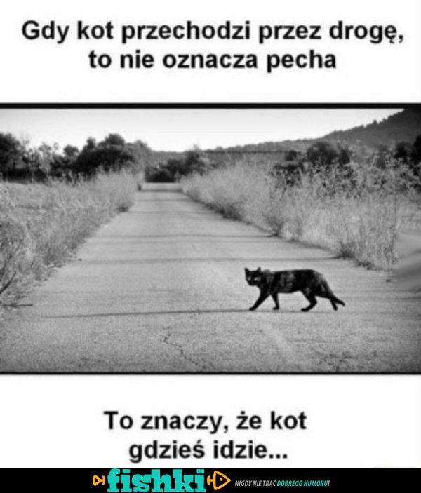 Kiedy kot przechodzi przez ulicę