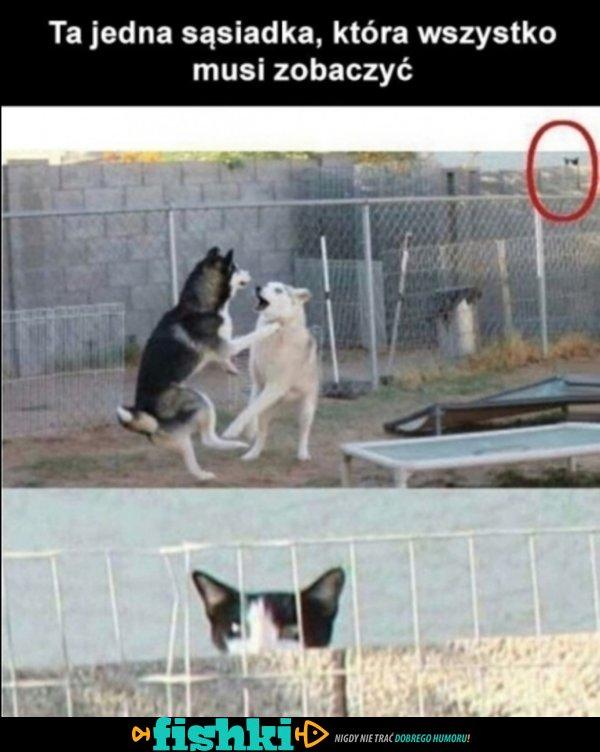Takie są sąsiadki