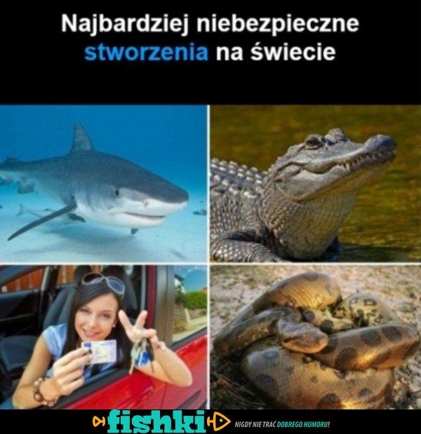 Niebezpieczne stworzenia na ziemi...