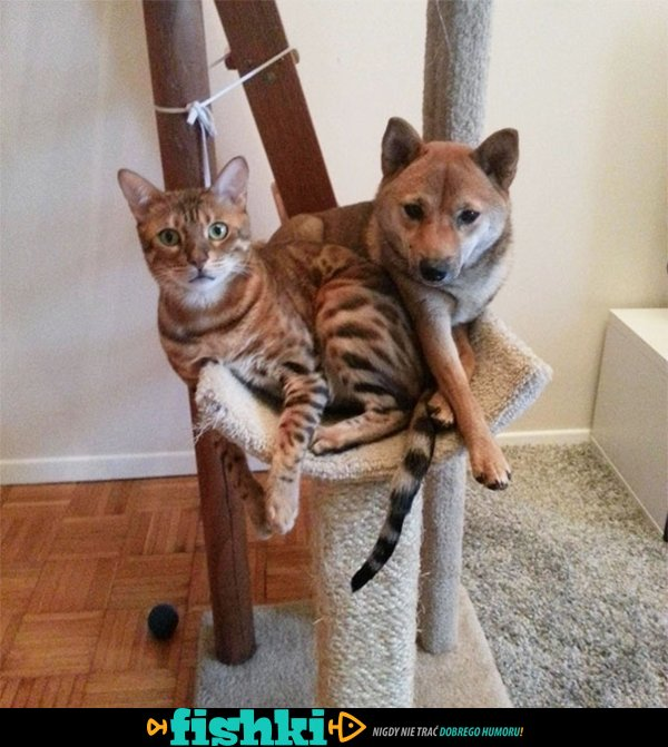 Myślą, że są kotami - zdjęcie 1