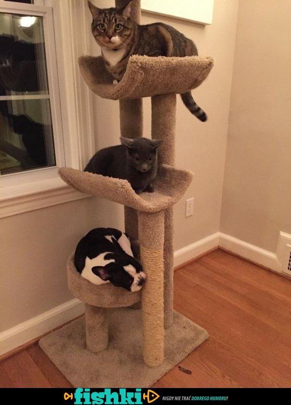 Myślą, że są kotami - zdjęcie 11