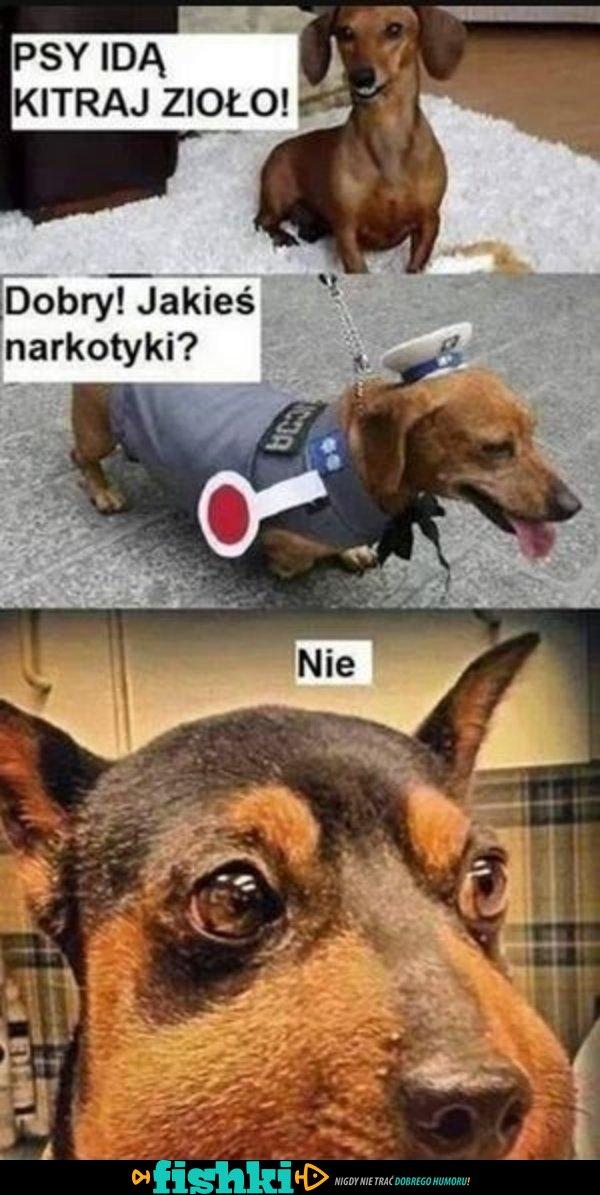 Idą psy!