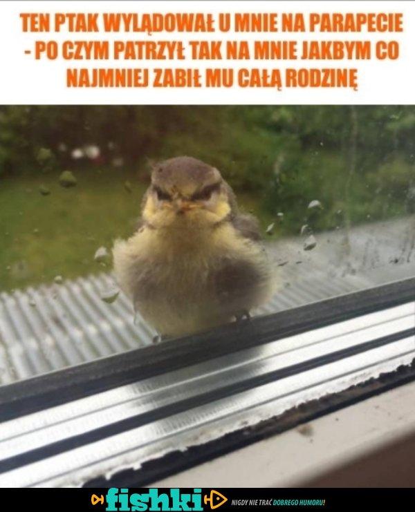 Wylądował ptak
