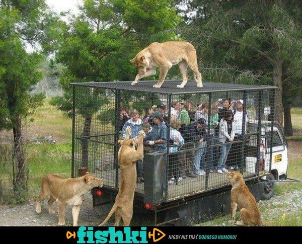 Pewnego razu w ogrodzie zoologicznym