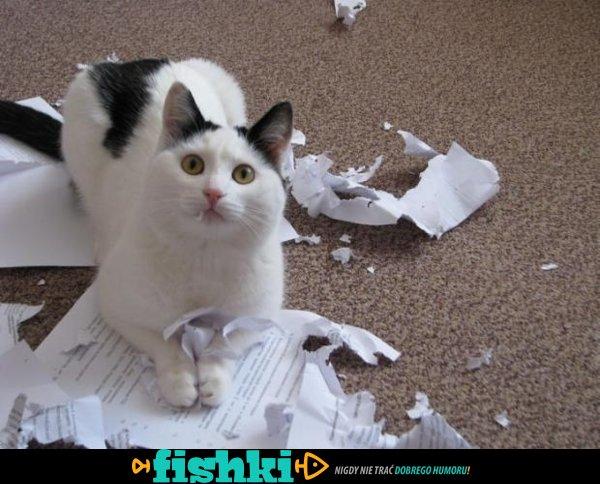 Złośliwe koty - zdjęcie 1