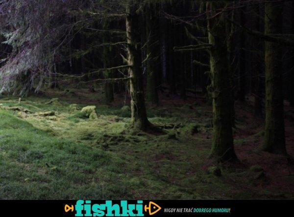 Tajemnicze lasy - zdjęcie 1