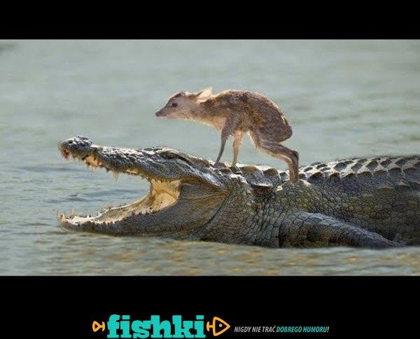 Zwierzęta ratują inne zwierzęta
