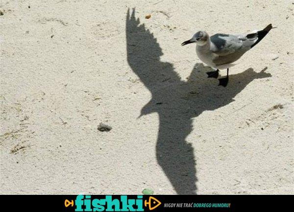 Niesamowite cienie - zdjęcie 1