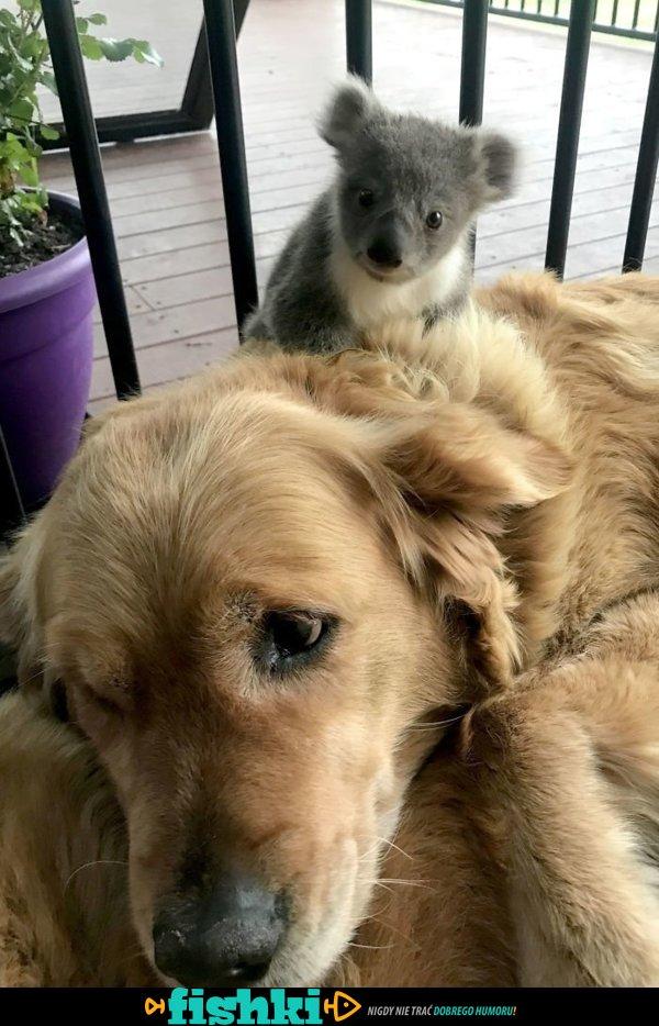 Najlepsi przyjaciele - zdjęcie 1