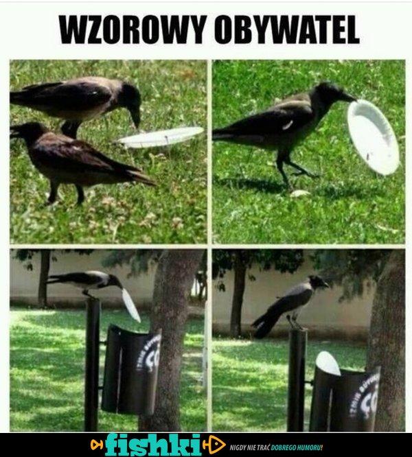 Wzorowy obywatel!