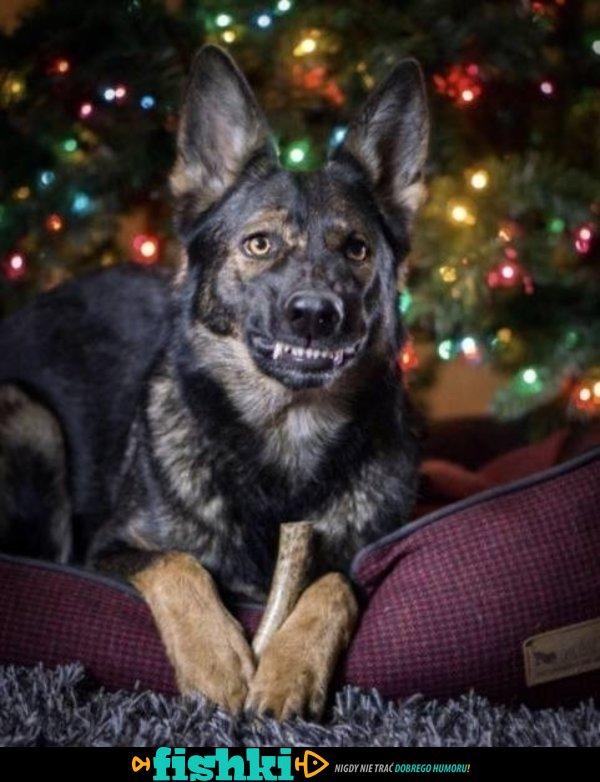 Śmieszne zwierzaki - zdjęcie 23