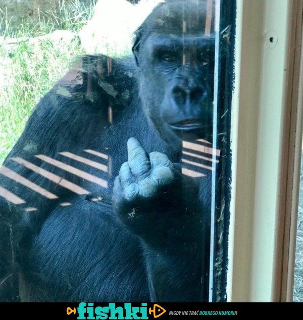 Zoo potrafi zaskoczyć - zdjęcie 11