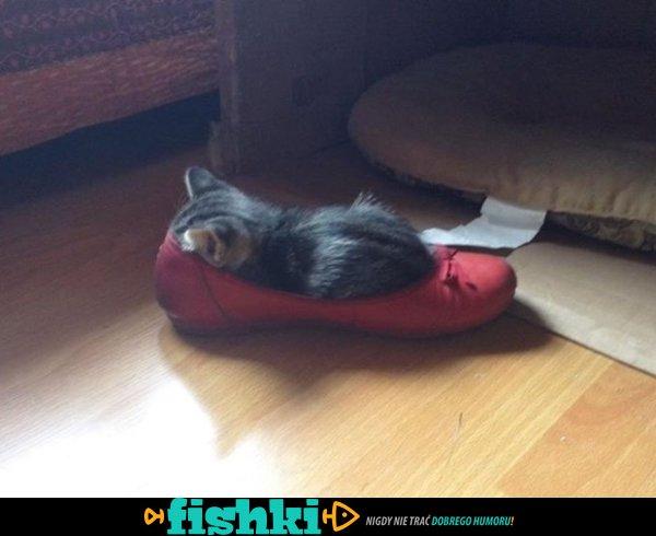 Ach te kociaki - zdjęcie 20