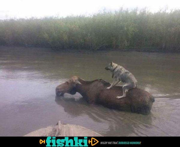 Normalny dzień w Rosji