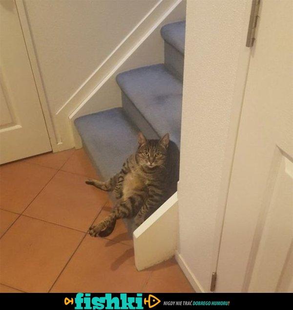 Urocze kociaki - zdjęcie 1