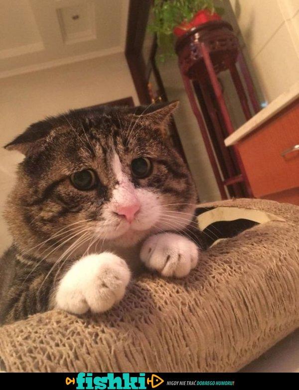 Dramatyzujący kotek - zdjęcie 15