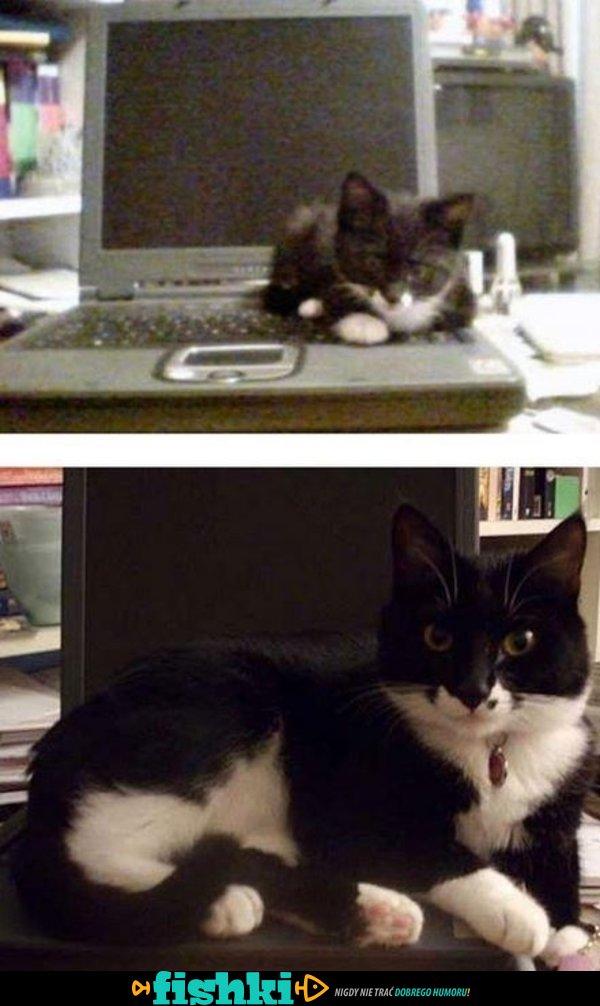 Kiedy kotki dorastają - zdjęcie 16