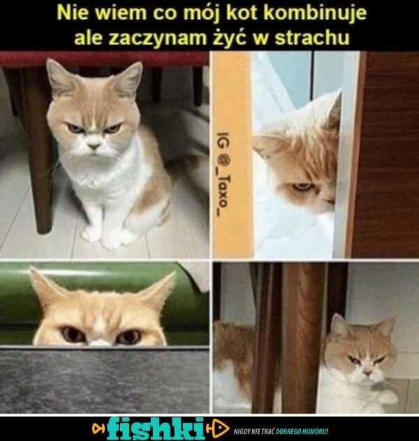 Boję się mojego kota