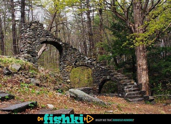 Dziwne znaleziska w lesie - zdjęcie 29