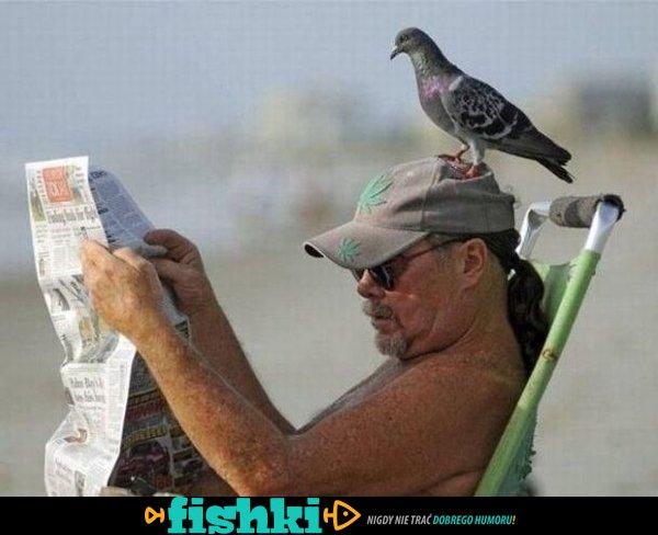Złośliwe ptaki - zdjęcie 8