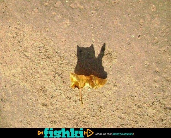 Rewelacyjne cienie - zdjęcie 15