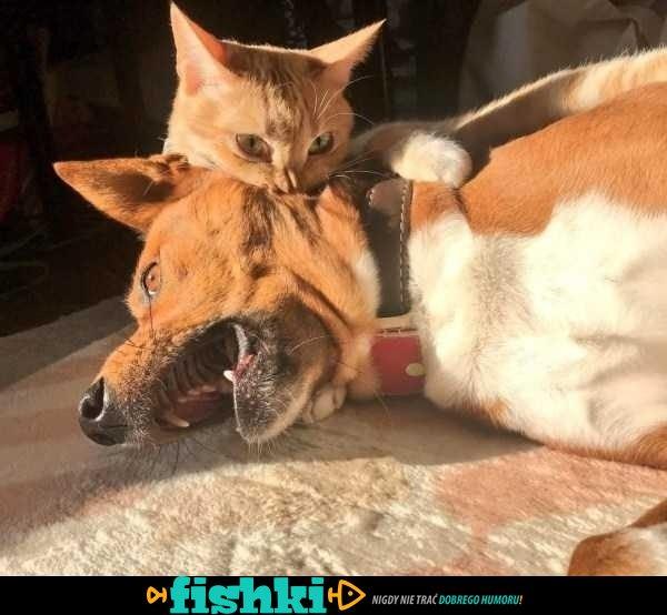 Ach te zwierzaki - zdjęcie 1