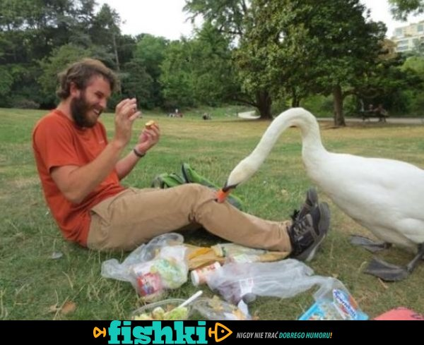 Złośliwe ptaki - zdjęcie 5