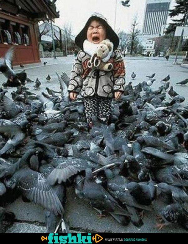 Złośliwe ptaki - zdjęcie 1