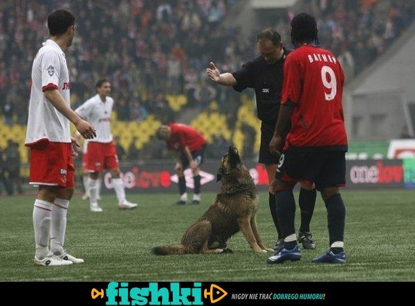 Zwierzaki na boisku - zdjęcie 6