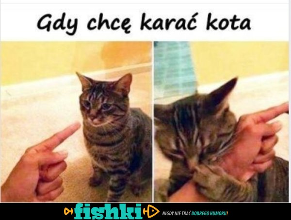 Karanie kota
