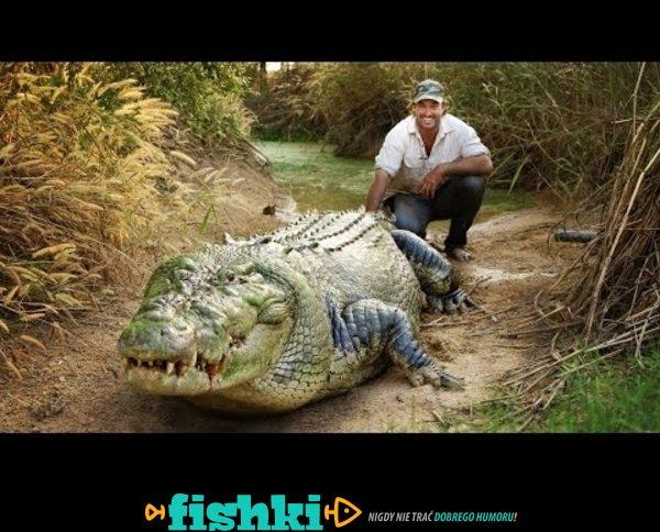 Karmienie ogromnego krokodyla