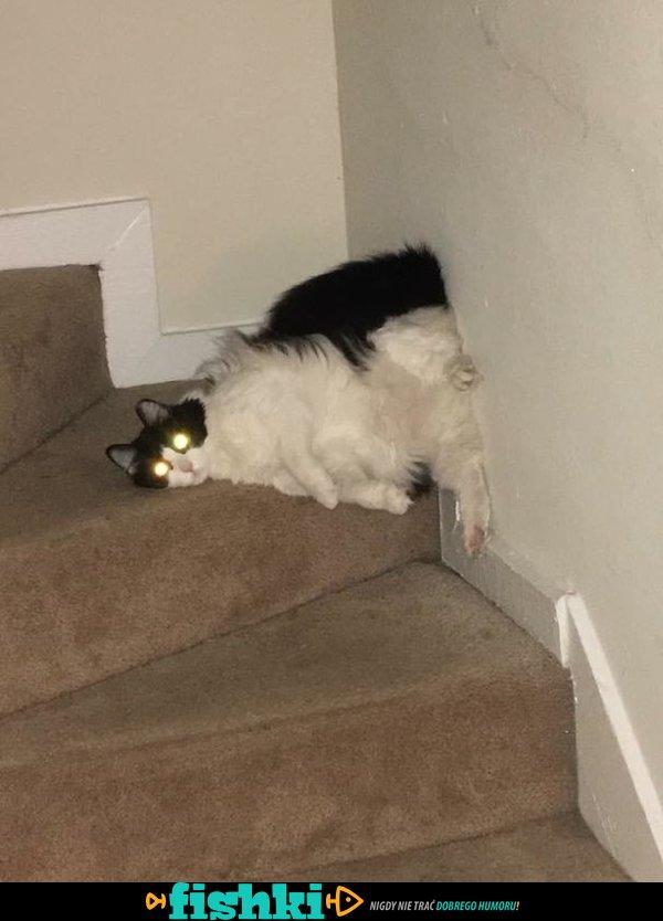 Śpiące kociaki - zdjęcie 43
