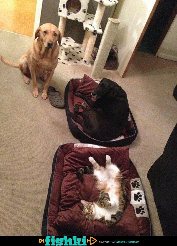 Koty zdominowały psy - zdjęcie 22