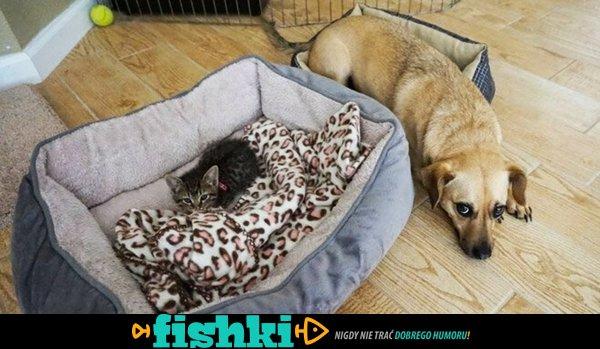 Koty zdominowały psy - zdjęcie 1