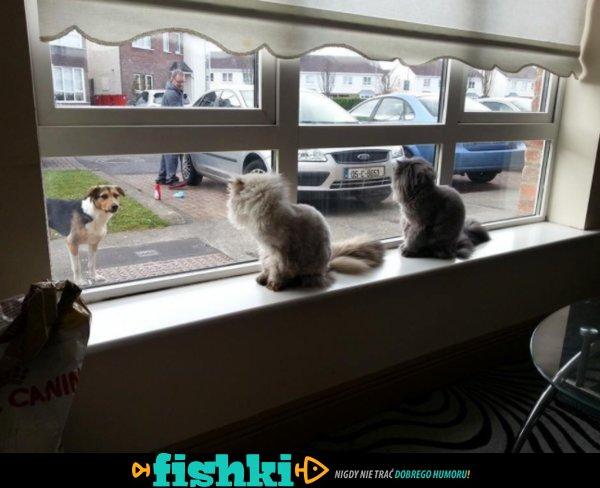 Słodkie kociaki - zdjęcie 1