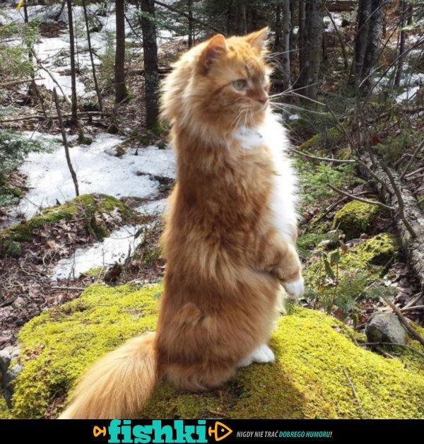 Słodkie kociaki - zdjęcie 7