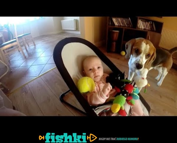 Winny pies przeprasza za kradzież zabawki